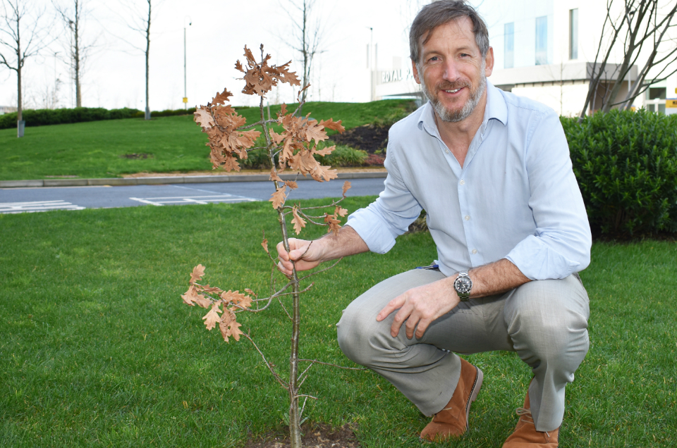 Oak trees from old site planted at Royal Papworth's new hospital